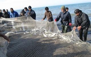 دریای مازندران موهبت مغفول مانده در تحقق اقتصاد مقاومتی/ صید بیرویه و آلودگی دو عامل مهم نابودی ماهیان خزر