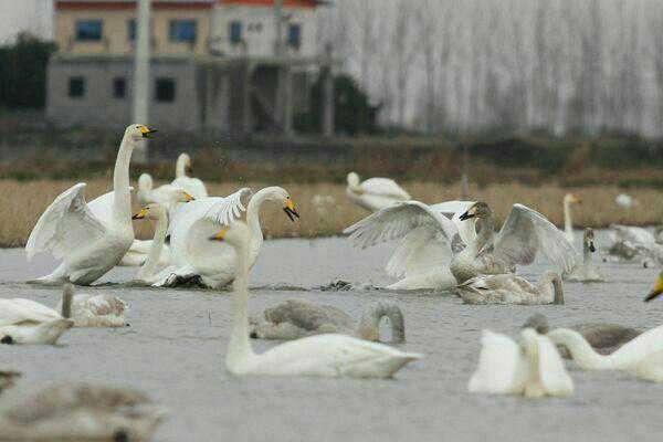 پرندگان مهاجر در شرایط زمستانه مهاجرت بهسر میبرند