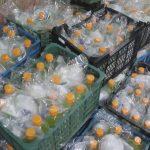 اهدای بسته کمک معیشتی به خانوادههای درگیر کرونا در فریدونکنار